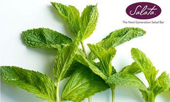 Salata Brings Enjoy-Mint To June
