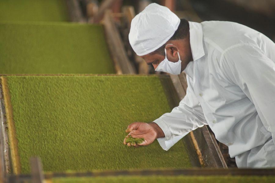 Teatulia Organic Teas Launch In Three Major Retailers